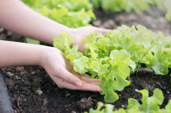 農業系専門学校のプロモーション映像事例5選